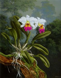 Cattleya - Acrilic on canvas / Acrílico sobre tela - 50cm x 60cm. Wanderley Xavier Junior. Botanical Drawings, Botanical Prints, Acrylic Painting Canvas, Abstract Watercolor, Robert Mapplethorpe Photography, Orchid Drawing, Jungle Flowers, Watercolor Paintings For Beginners, Anime Drawings Sketches