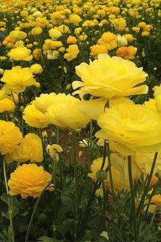 Imagen de flowers, nature, and yellow
