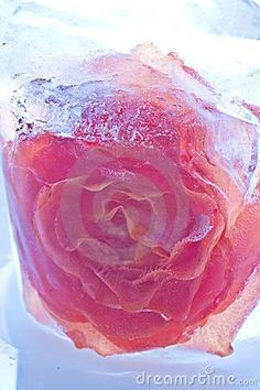 Photo about Rose flower frozen in ice. Image of natural, water, rose - 6004289 Flower Ice Cubes, Ice Bowl, Frozen Rose, Frozen In Time, Winter Flowers, Edible Flowers, Favorite Recipes, Valentines, Crafty