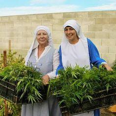 La lucha de las Monjas contra una regulación Anti-Cannabis