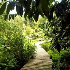 The botanical garden at Tregothnan in Cornwall.