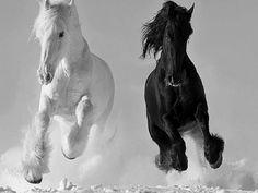 Belles images de chevaux en noir et blanc.