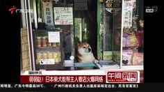 Serigala Di jepang jaga toko, keren
