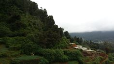 The hills in Nuwara Eliya.