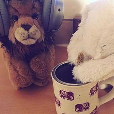 #bedtime . . . #relaxingmusic #tea #comfort #chill #strategies for #sleep #rest #angelo #stuffed #animals #everybody #cute #herbaltea #bestoftheday #instagood #iger #instagood #instapic