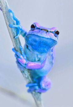 Pretty blue..