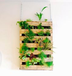 Tutorial - Awesome indoor living wall / vertical garden made from an old shipping pallet