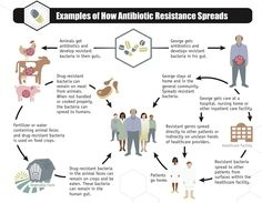 Antibiotic resistant strains of bacteria start in either a human or an animal. From there the bacteria spreads either through consumption (in the case of the animals) or though contact (in the case of the humans).