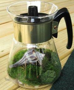 Repurpose coffee pots into lovely terrariums! #DIY