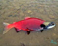So beautiful fish!