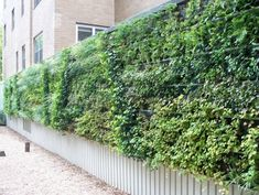 11 Living Privacy Fences | Gardening | Pinterest | Living Privacy Fences, Privacy  Fences And Gardens