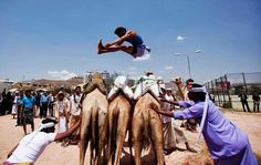 Jumping over the Camels -Yemen