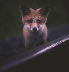 Fuchs, Konsta Punkka