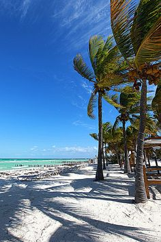 Isla Mujeres, Mexico. It's as beautiful in real life as in pictures.