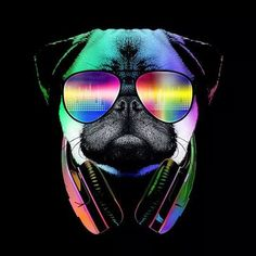 Puglife. this just makes me smile. :D