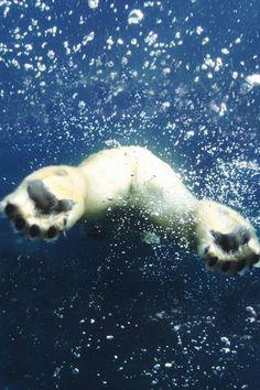 bear feetz