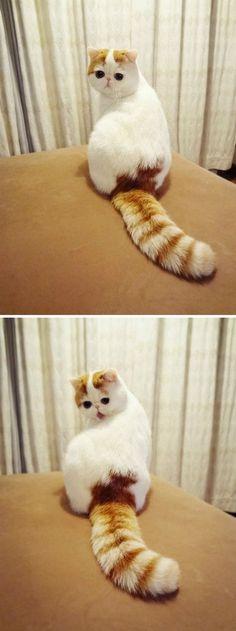 Kitty clean annetookeen