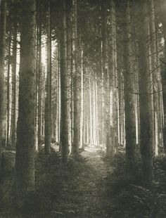 Edouard Hannon, Waldlichtung (Forest Clearing), 1897, Photogravure. Thank you,arsvitaest.