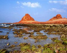 Socotra Islands, Yemen  These famous trees have roots all over their bodies and there is more to be explored.