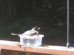 "Our North Carolina Bird ""Spa"" lol!!"