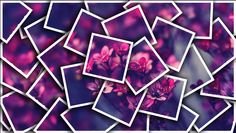 Image of flowers that I got from google and changes it in Photoshop in the style of David Hockey  #art #Photo #DavidHockey #Photoshop #style #flowers #purple #changed #google