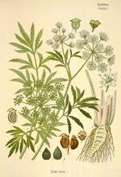 Toxic Weed Species  1. Poison Hemlock Weed  2. Waterhemlocks  3. Oleander  4. Bittersweet nightshade  5. Common pokeweed or Pokeweed  6. Pennyroyal  7. Meadow deathcamas   8. Foxglove  9. Groundcherry  10. Jimsonweed