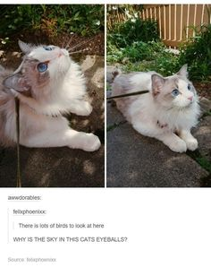 Yet another cat that's more attractive than me.