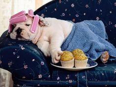 Cute British Bulldog With Rollers On It's Head Asleep