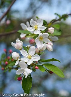 Items similar to Spring New England Flowers Photo / Flower Photography / Nature Photography / Travel Photography / Photography Print / Home Decor Wall Art on Etsy Dogwood Flowers, Blooming Flowers, Flowers Nature, Spring Blossom, Blossom Flower, Ikebana, Nature Photography Flowers, Travel Photography, Pink Flowers