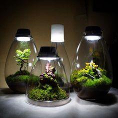【mosslight1955】さんのInstagramをピンしています。 《#苔あかり #モスライト#mosslight #LED#Lightning#コケ#moss#terrarium #テラリウム#lamps#interiordesign#plants#観葉植物#苔#mossgarden#緑#モスグリーン#インテリア#こけ#苔テラリウム#mossterrarium#ボトルテラリウム#苔盆栽#コケリウム#mossarium#mossmeister》