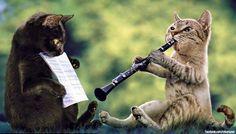 komik kediler - Google'da Ara