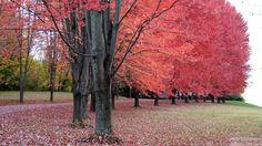 Perdido por aí: Outono na Nova Inglaterra e Quebec – 4.000 km de estrada (posts PERFEITOS!!!!)