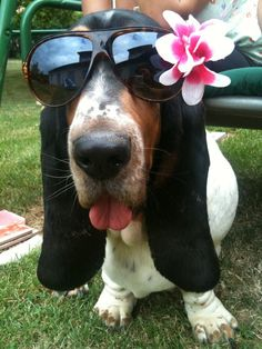 "* * "" Havin' a basset be an asset, but dat doesn'ts include dressin' us up likes…"