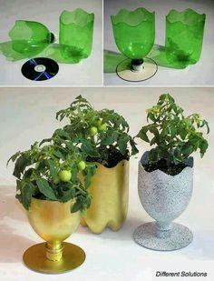 Pop bottle and cd planter