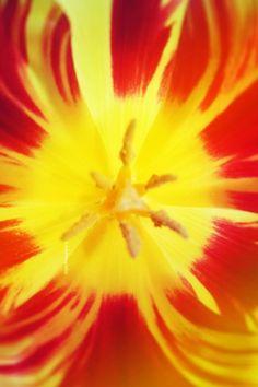Kleur-tegen-kleur-contrast. Het grootst wanneer twee primaire kleuren (blauw, rood, geel) tegenover elkaar staan. In dit geval rood en geel.