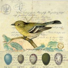 vintage birds | raven, a tapir and a beetle: collage