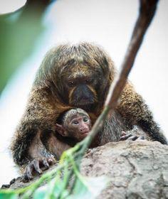 Toumi, Saki Monkey, Houston Zoo - Cutest Baby Animals at U.S. Zoos | Travel + Leisure