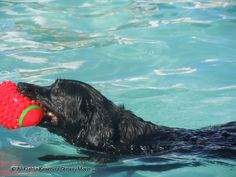 Griz better swim like this soon!