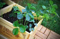#orto in #cassetta #ortoincassetta #vino #wine #grappa #francoli #francoligrappa #vegetables #recycling