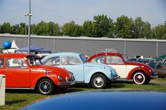 """owned a white beetle much like the body line of the blue one in the picture. One detail a big letter was on the door.. """"B"""" for Brady and after we married the """"B"""" stayed..LOL's"""
