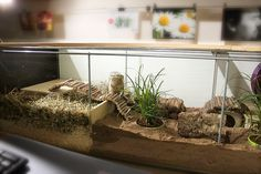 ikea detolf hack for hamster cage..i want to do this!!