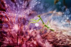 Amazing Miniature World of Insects Captured By Nordin Seruyan