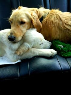 http://0height.com/aww/cute-dog-pictures-17-pictures