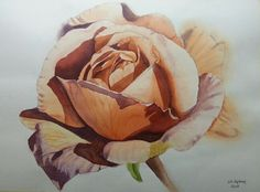 Watercolour - rose