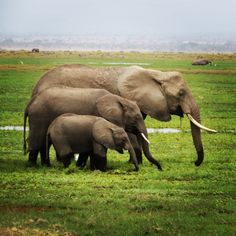 An Elegance of Elephants