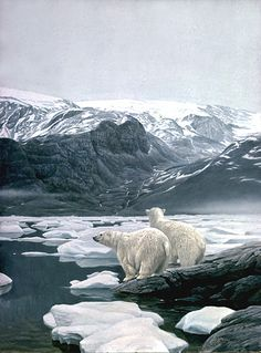 """Polar Bears at Baffin Island by Robert Bateman.  """"In this painting, I have been gazing into the landscape which is the direction I want the viewer to gaze. Three-dimensional form is important in all of my paintings, but I especially enjoyed playing with it in this one. I would like the viewer to be carried back across the pack ice, past the sea mist and up the rugged valley."""