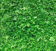 wall background with green leaves - Stock Photo - Images