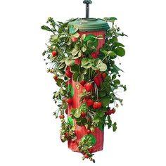 Klicka här för att läsa mer om hängande odling från smartasaker.se