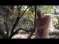 Bosque Alimentos de Juan Anton en Alzira - ▇► https://www.youtube.com/watch?v=uNyAo8k3zhE BOSQUE COMESTIBLE, FOOD FOREST, ARBOLES FRUTALES, QUINTA DE ARBOLES, ESPAÑA. - #PERMACULTURA #FOODFOREST ~ BOSQUEDEALIMENTOS.WORDPRESS.COM