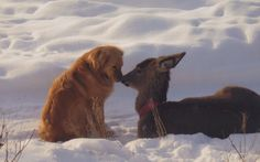 This baby deer was an orphan, but the dog adopted it and the two animals became best friends ~  Photography by Lindy Wagner.
